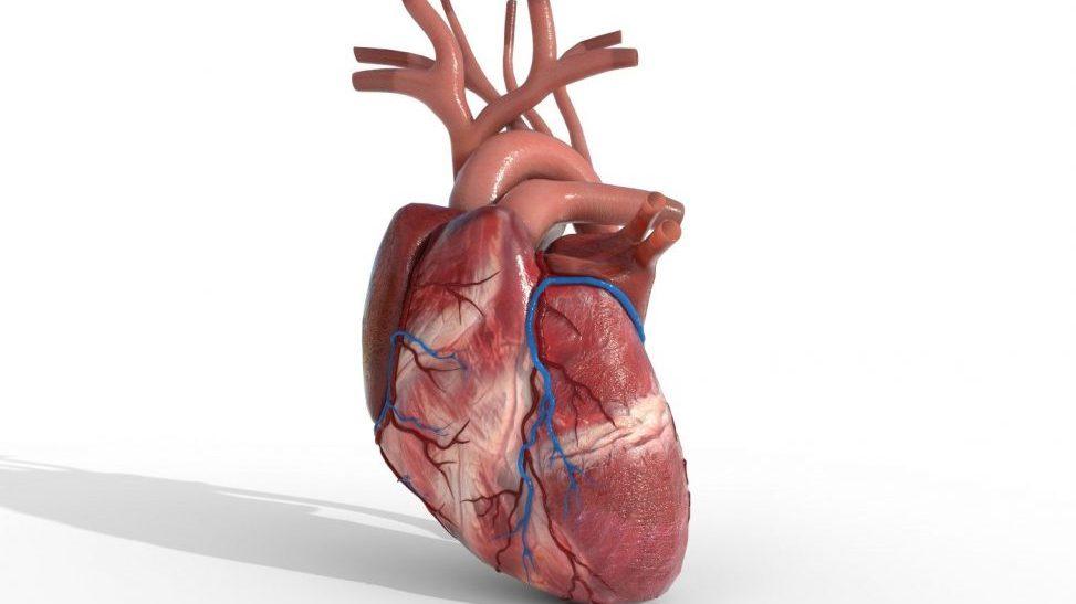 آیا نارسایی قلبی درمان دارد؟ بررسی روش های درمانی