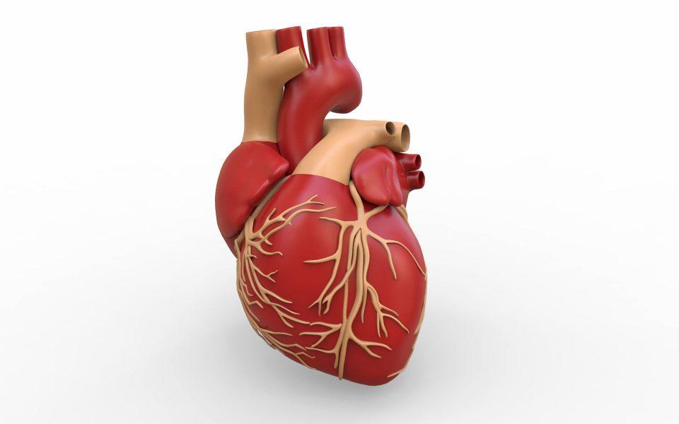 قرص های تپش قلب ؛ بررسی داروهای کاهش ضربان قلب و علت های آن
